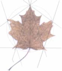 Maple leaf image with drafting lines.